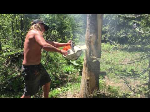 Naked women cutting down a tree with a chainsaw